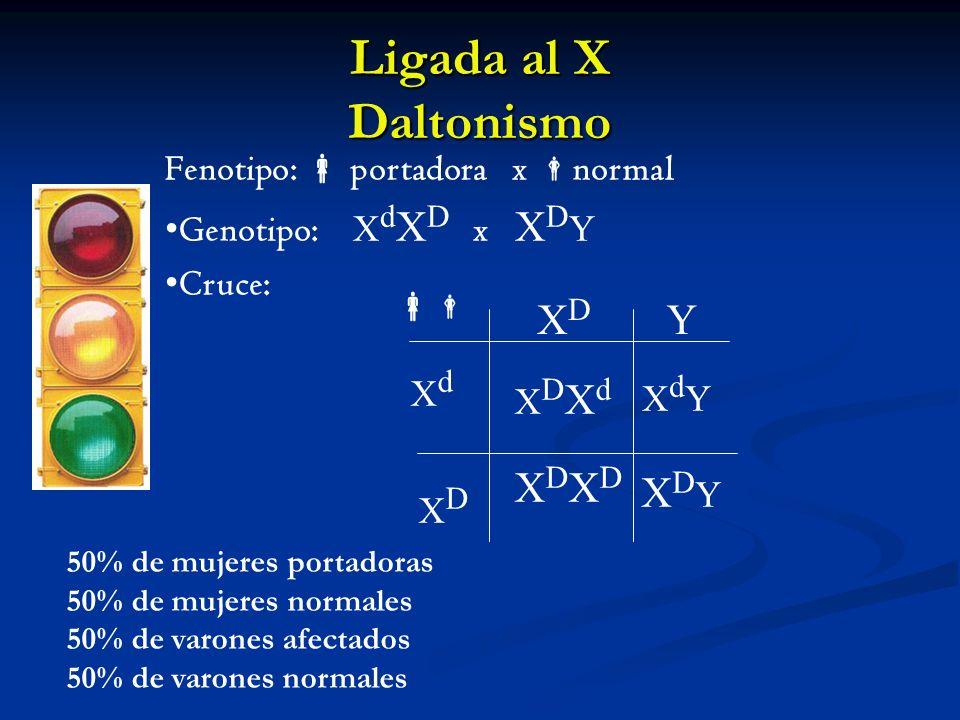 Ligada al X Daltonismo XdYXdY XDXD Y XdXd XDXD XDYXDY XDXdXDXd XDXDXDXD Fenotipo: portadora x normal Genotipo: X d X D x X D Y Cruce: 50% de mujeres p