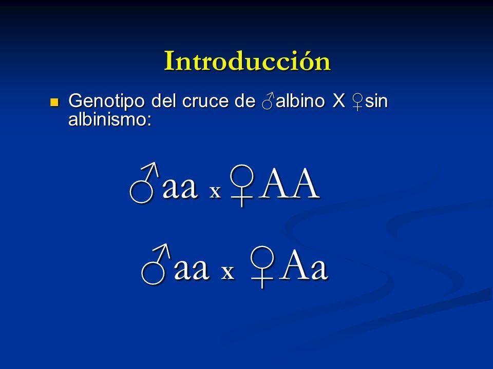 Introducción Genotipo del cruce de albino X sin albinismo: Genotipo del cruce de albino X sin albinismo: aa X AA aa X Aa