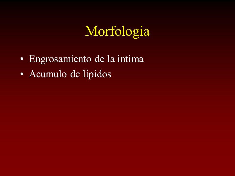 Morfologia Engrosamiento de la intima Acumulo de lipidos