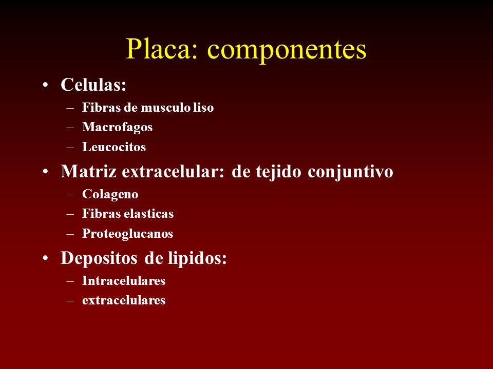 Placa: componentes Celulas: –Fibras de musculo liso –Macrofagos –Leucocitos Matriz extracelular: de tejido conjuntivo –Colageno –Fibras elasticas –Pro