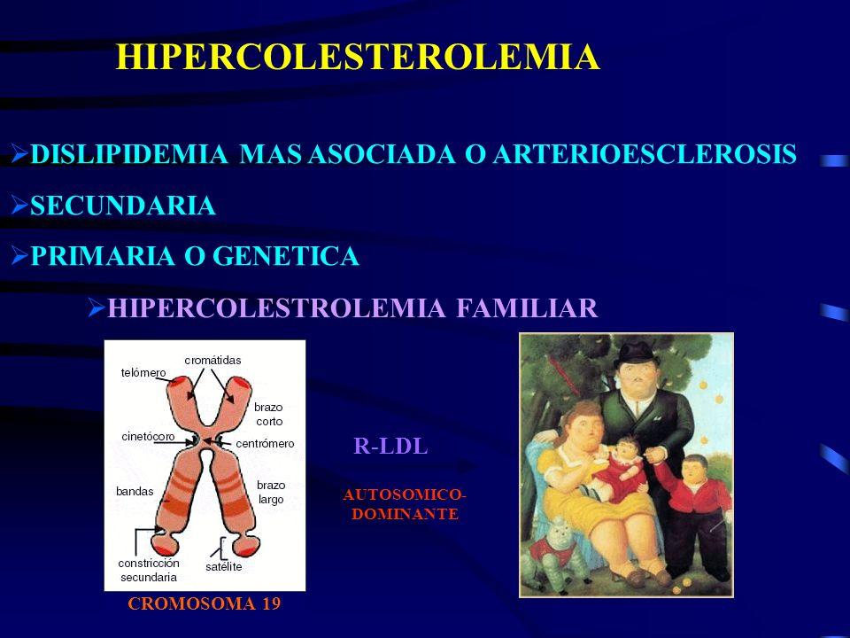 CROMOSOMA 19 HIPERCOLESTEROLEMIA DISLIPIDEMIA MAS ASOCIADA O ARTERIOESCLEROSIS SECUNDARIA PRIMARIA O GENETICA HIPERCOLESTROLEMIA FAMILIAR R-LDL AUTOSO