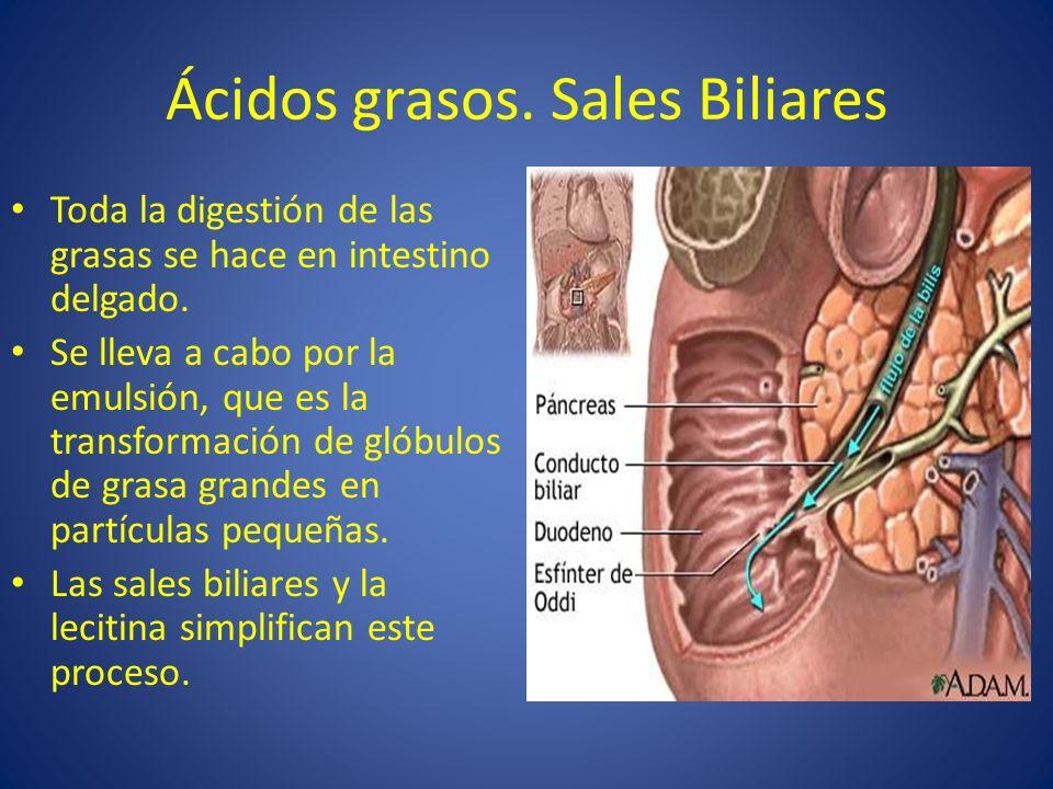 Ácidos grasos. Sales Biliares Toda la digestión de las grasas se hace en intestino delgado. Se lleva a cabo por la emulsión, que es la transformación