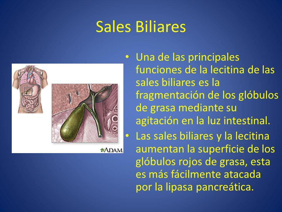 Sales Biliares Una de las principales funciones de la lecitina de las sales biliares es la fragmentación de los glóbulos de grasa mediante su agitació