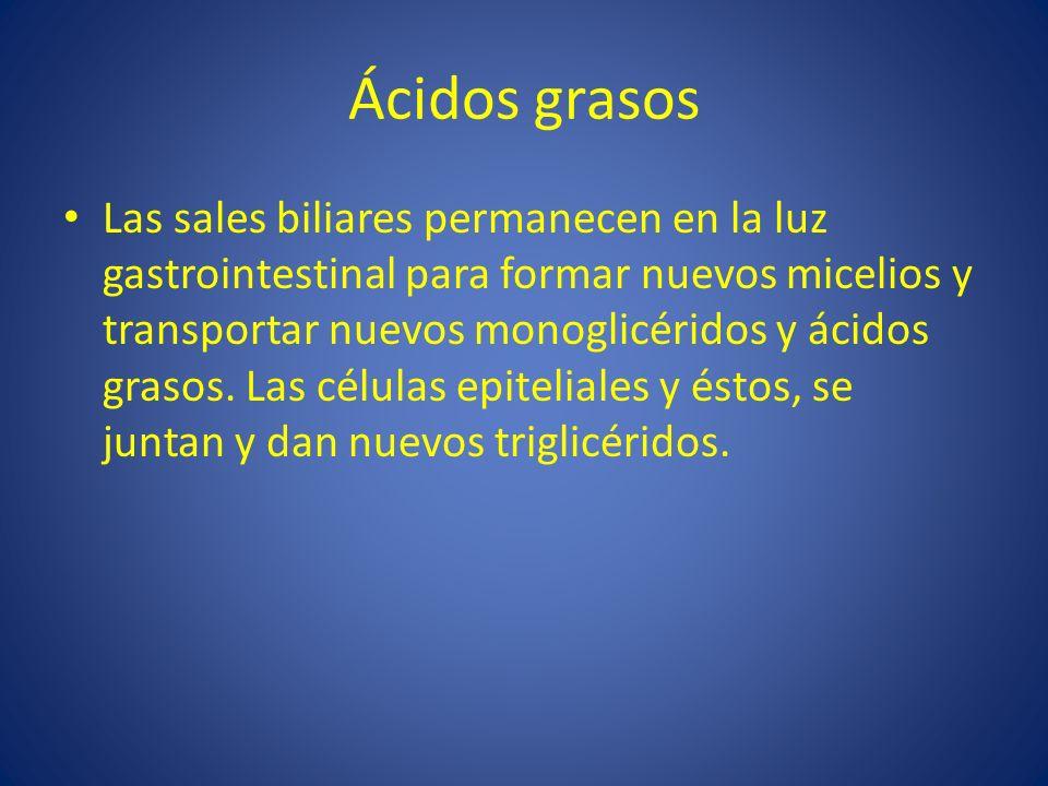 Ácidos grasos Las sales biliares permanecen en la luz gastrointestinal para formar nuevos micelios y transportar nuevos monoglicéridos y ácidos grasos