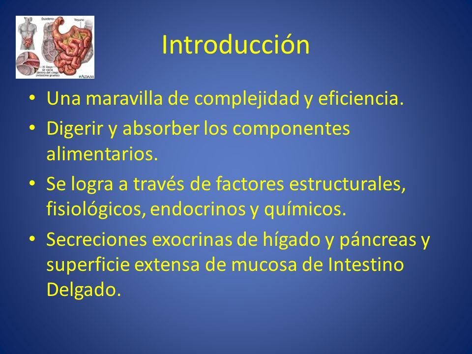Introducción Una maravilla de complejidad y eficiencia. Digerir y absorber los componentes alimentarios. Se logra a través de factores estructurales,
