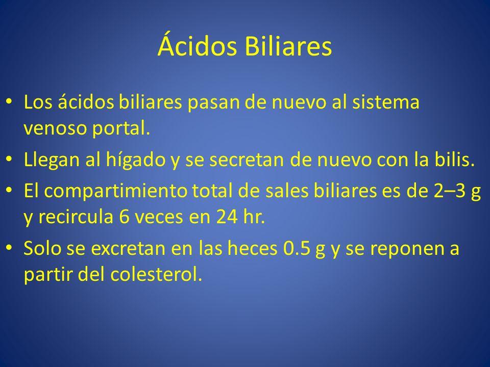 Ácidos Biliares Los ácidos biliares pasan de nuevo al sistema venoso portal. Llegan al hígado y se secretan de nuevo con la bilis. El compartimiento t