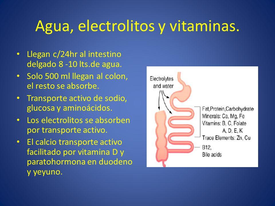 Agua, electrolitos y vitaminas. Llegan c/24hr al intestino delgado 8 -10 lts.de agua. Solo 500 ml llegan al colon, el resto se absorbe. Transporte act