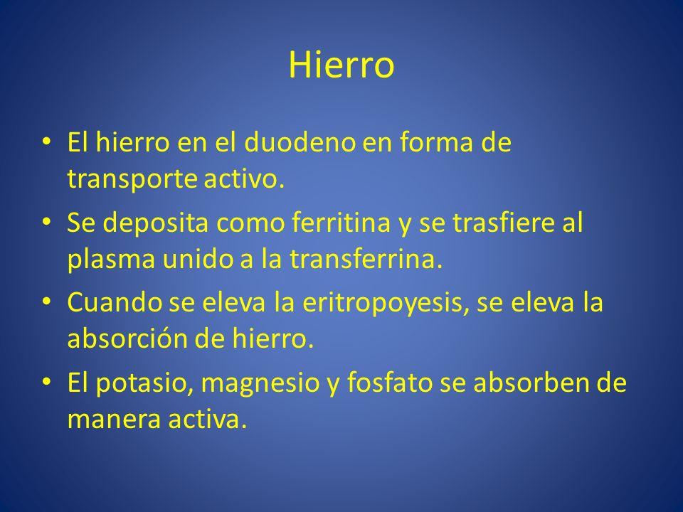 Hierro El hierro en el duodeno en forma de transporte activo. Se deposita como ferritina y se trasfiere al plasma unido a la transferrina. Cuando se e