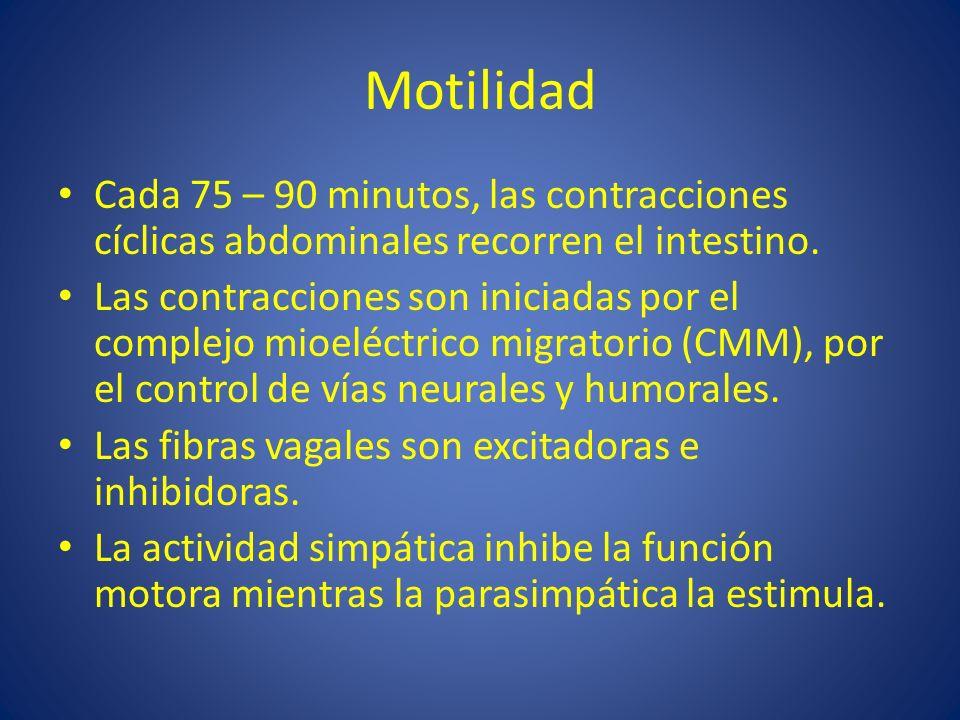 Motilidad Cada 75 – 90 minutos, las contracciones cíclicas abdominales recorren el intestino. Las contracciones son iniciadas por el complejo mioeléct