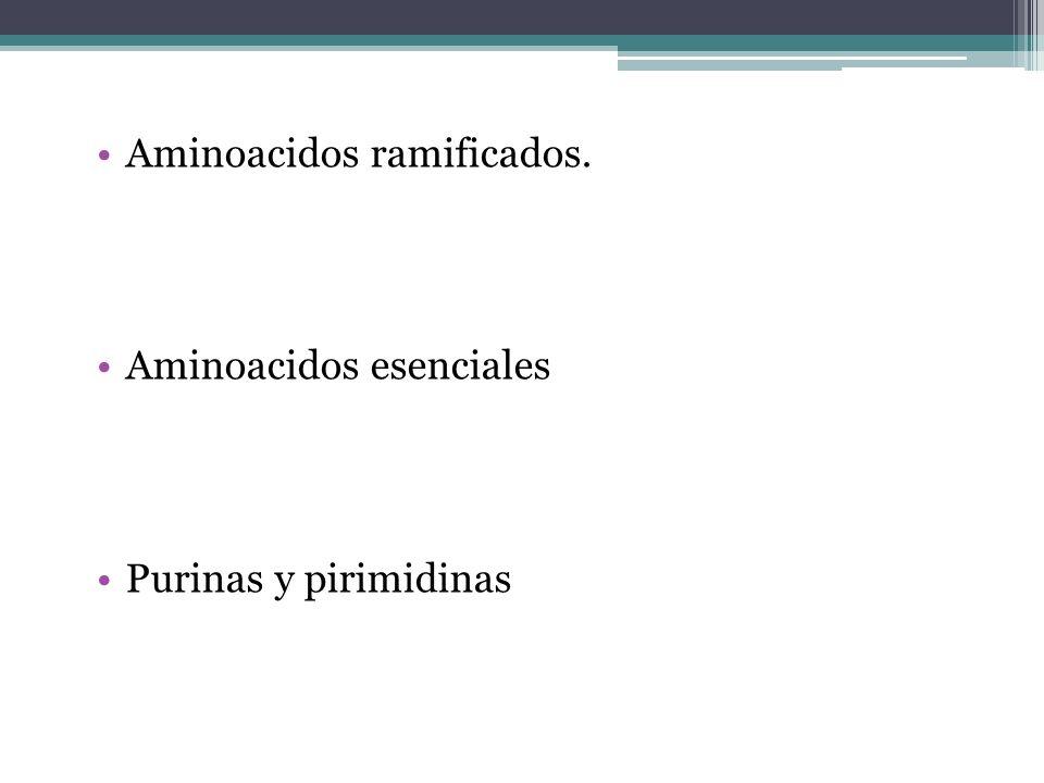 Aminoacidos ramificados. Aminoacidos esenciales Purinas y pirimidinas
