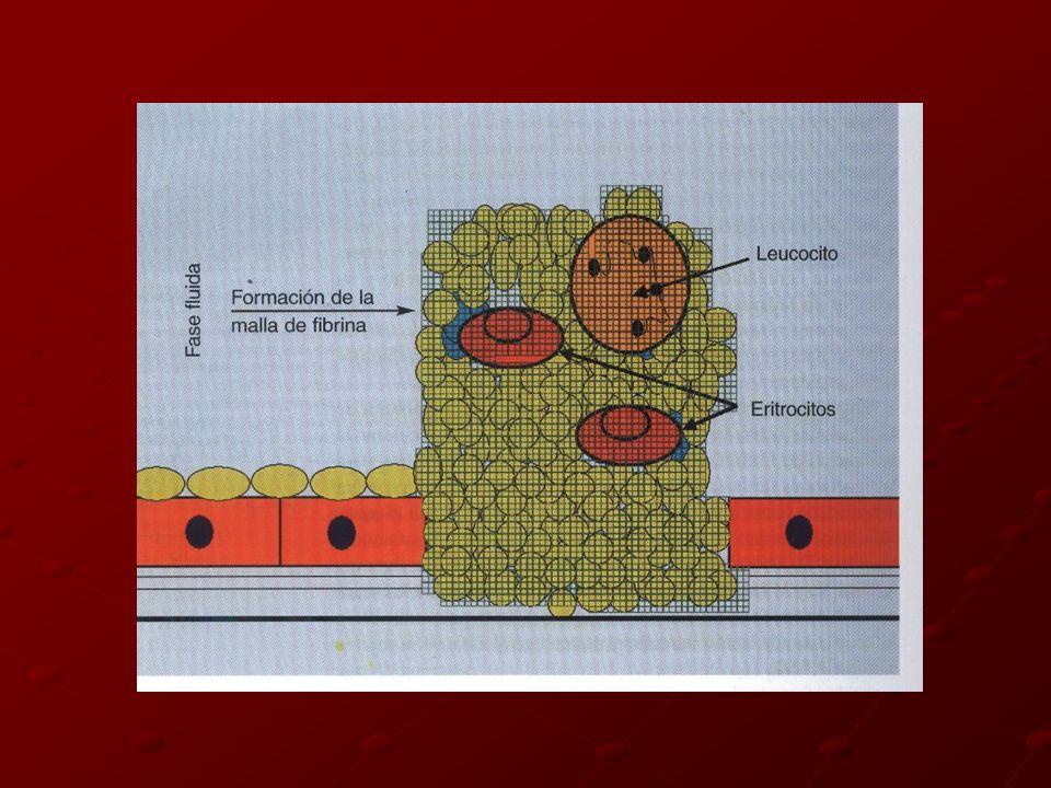 FASE PLASMATICA 1960 Primer modelo de coagulación Cascada secuencial Activación de proenzimas Vías: Intrínseca y Extrínseca