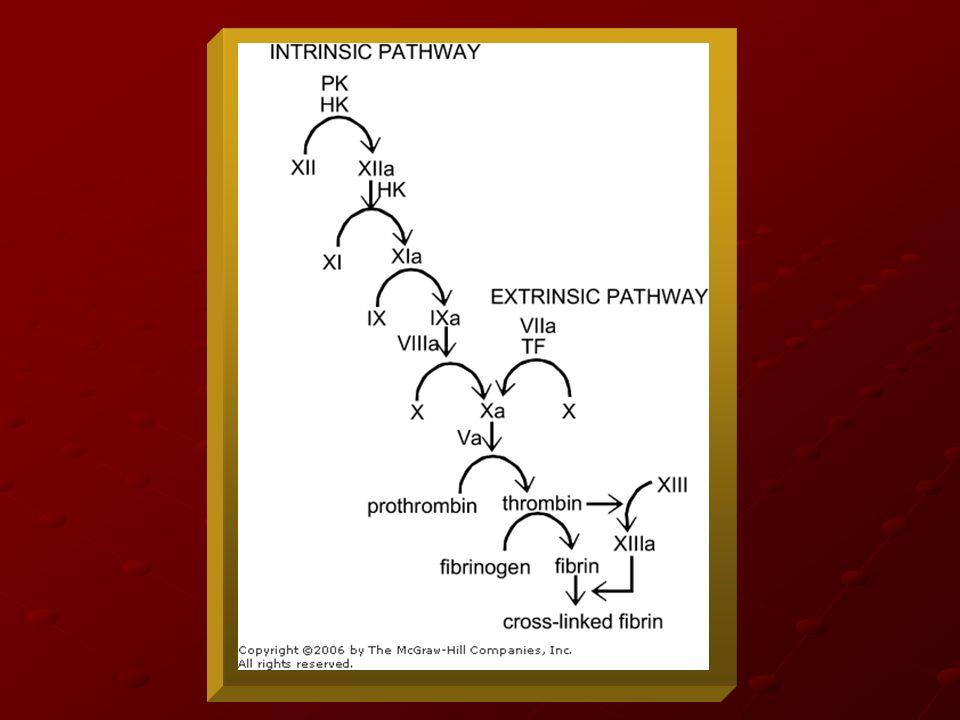 Cascada de la Coagulación Históricamente se han descrito 2 vías: - Intrínseca: inicia con el factor XII, XI, IX, VIII, Precalicreína y CAPM - Intrínseca: inicia con el factor XII, XI, IX, VIII, Precalicreína y CAPM - Extrínseca: inicia con el factor VII y Factor Tisular.