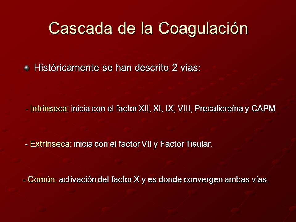 Cascada de la Coagulación Históricamente se han descrito 2 vías: - Intrínseca: inicia con el factor XII, XI, IX, VIII, Precalicreína y CAPM - Intrínse