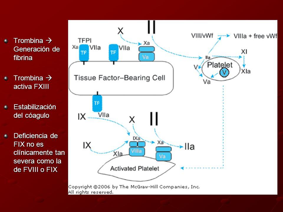 Trombina Generación de fibrina Trombina activa FXIII Estabilización del cóagulo Deficiencia de FIX no es clínicamente tan severa como la de FVIII o FI