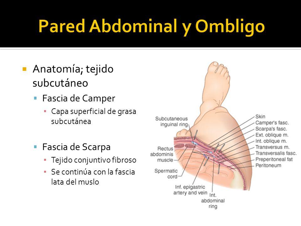 Anatomía; tejido subcutáneo Fascia de Camper Capa superficial de grasa subcutánea Fascia de Scarpa Tejido conjuntivo fibroso Se continúa con la fascia