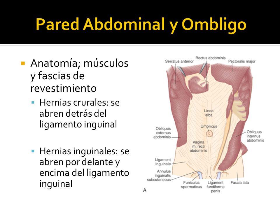 Anatomía; músculos y fascias de revestimiento Hernias crurales: se abren detrás del ligamento inguinal Hernias inguinales: se abren por delante y enci