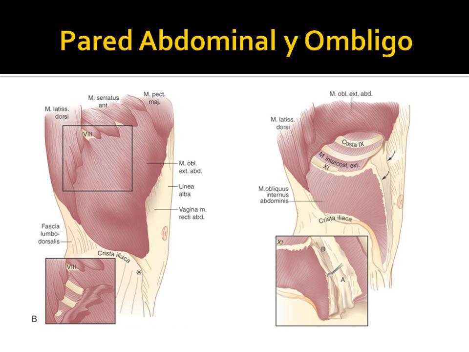 Neoplasias malignas de la pared abdominal Sarcoma de la pared abdominal Subtipos: liposarcoma, fibrosarcoma, rabdomiosarcoma, leiomiosarcoma e histiocitoma fibroso maligno Los de la pared abdominal se presentan como masa indolora