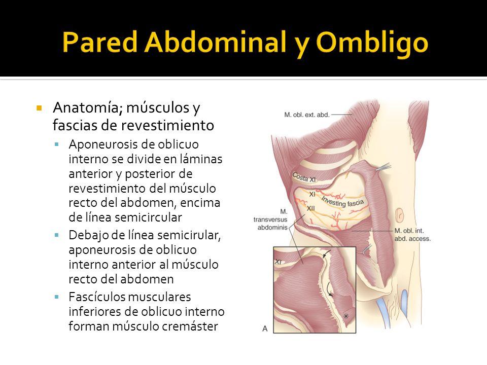 Anatomía; músculos y fascias de revestimiento Fascia transversal cubre superficie profunda de músculo transverso del abdomen Forma revestimiento fascial completo, integridad estructural de la pared abdominal Por definición, hernias obedecen a defecto de la fascia transversal