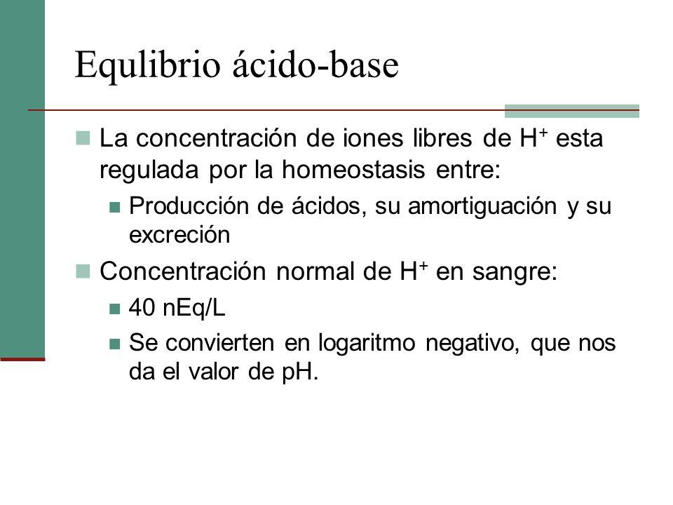 Equlibrio ácido-base La concentración de iones libres de H + esta regulada por la homeostasis entre: Producción de ácidos, su amortiguación y su excre