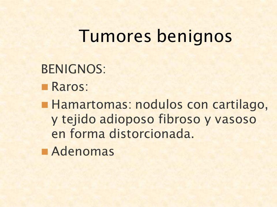 Tumores benignos BENIGNOS: Raros: Hamartomas: nodulos con cartilago, y tejido adioposo fibroso y vasoso en forma distorcionada. Adenomas