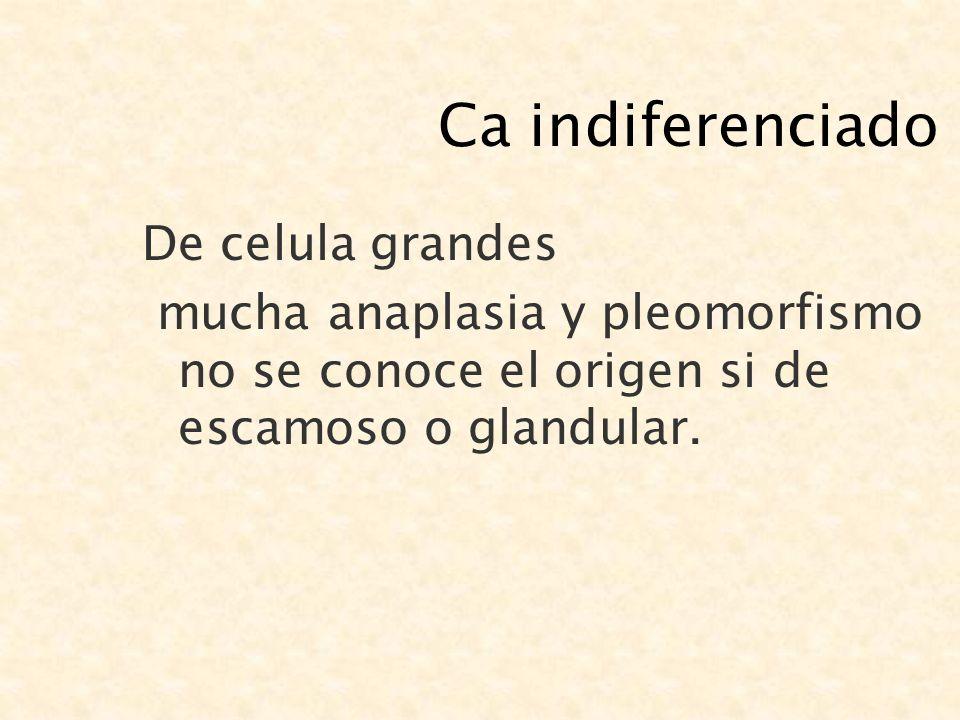 Ca indiferenciado De celula grandes mucha anaplasia y pleomorfismo no se conoce el origen si de escamoso o glandular.