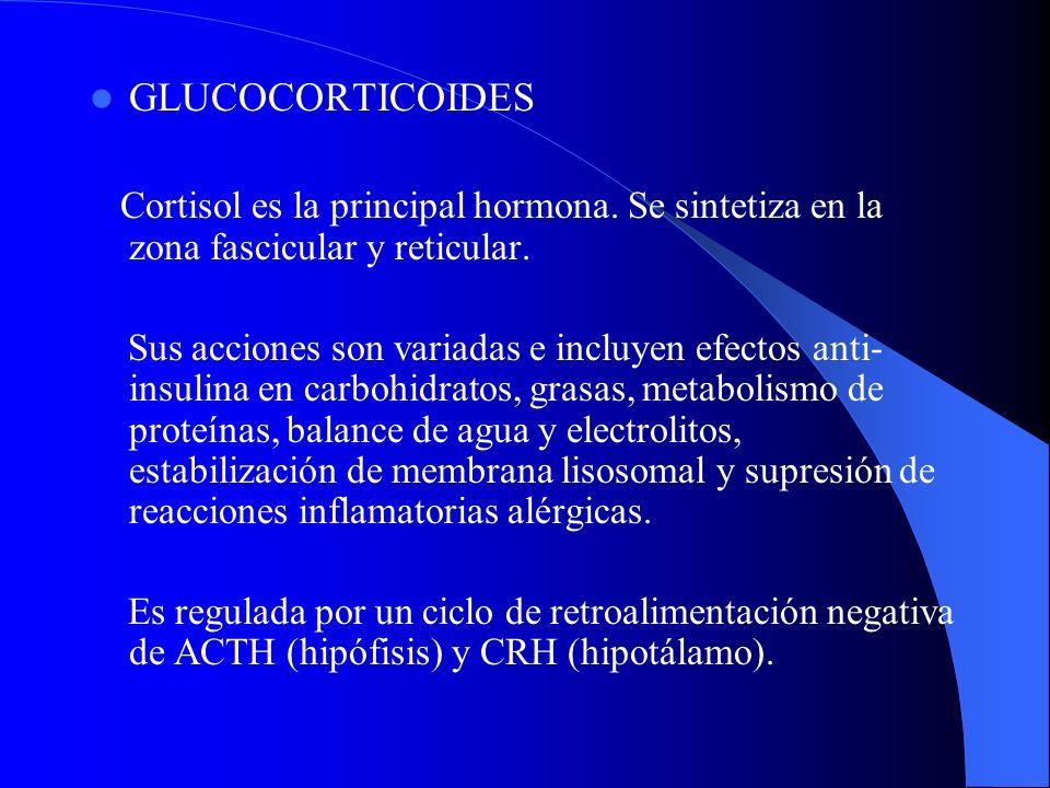 GLUCOCORTICOIDES Cortisol es la principal hormona. Se sintetiza en la zona fascicular y reticular. Sus acciones son variadas e incluyen efectos anti-