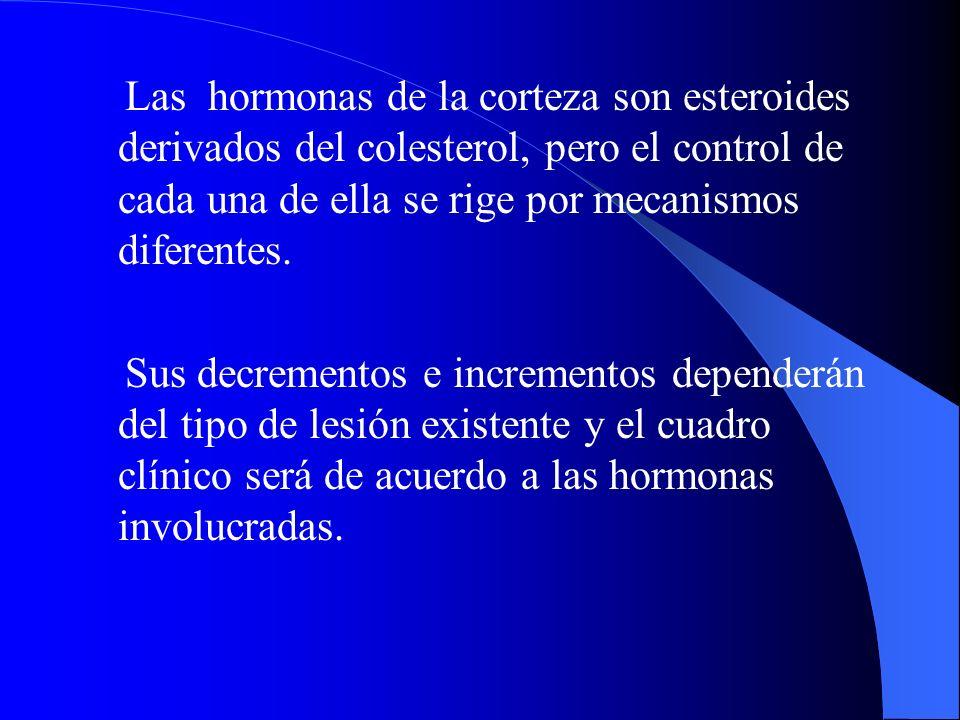 Las hormonas de la corteza son esteroides derivados del colesterol, pero el control de cada una de ella se rige por mecanismos diferentes. Sus decreme
