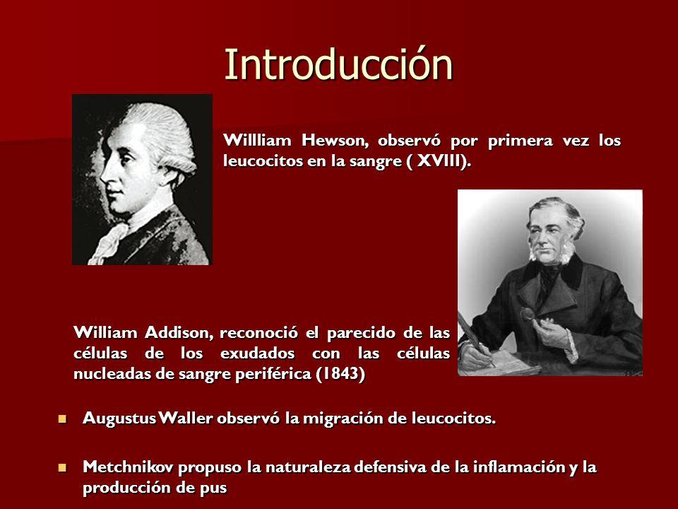 Introducción Willliam Hewson, observó por primera vez los leucocitos en la sangre ( XVIII). William Addison, reconoció el parecido de las células de l
