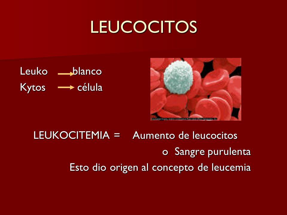 LEUCOCITOS Leuko blanco Kytos célula LEUKOCITEMIA = Aumento de leucocitos o Sangre purulenta o Sangre purulenta Esto dio origen al concepto de leucemi