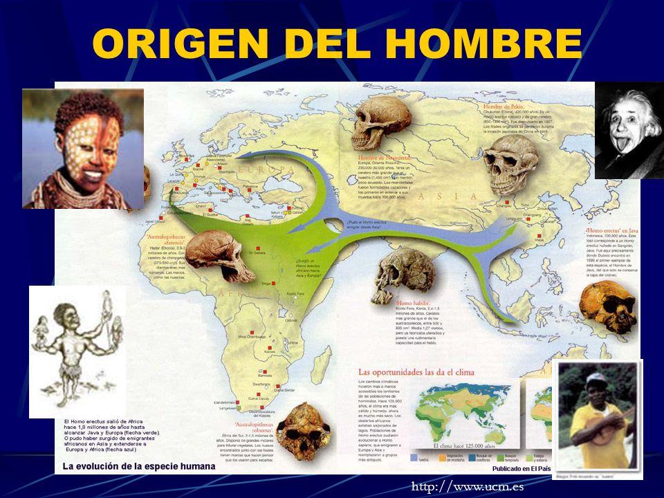 ORIGEN DEL HOMBRE http://www.ucm.es