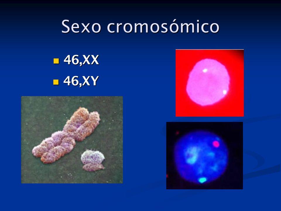 Anomalías del desarrollo sexual ANOMALÍAFRECUENCI A CARIOTIPOMANIFESTACIONESDIAGNÓSTICO Hermafroditismo verdadero Muy raro46XX 46XX/XY Genitales ambiguos La orientación masculina o femenina depende del predominio hormonal Tejido ovárico y testicular.