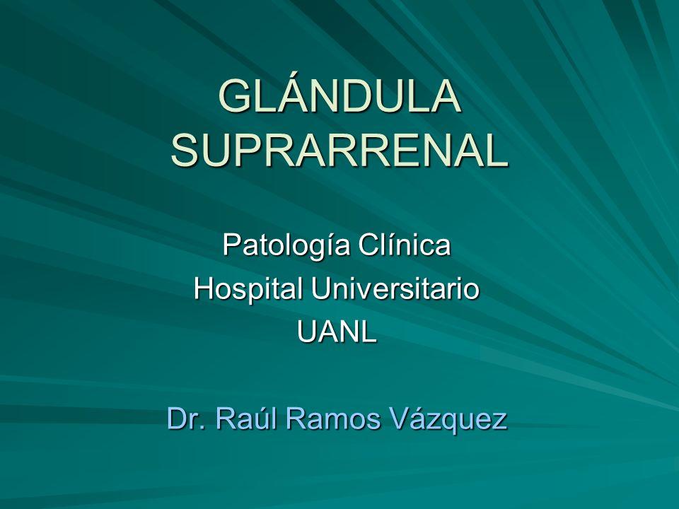 SUPRARRENALES Las glándulas suprarrenales tienen 2 porciones: Las glándulas suprarrenales tienen 2 porciones: - Corteza: zona glomerular, zona fascicular y zona reticular.