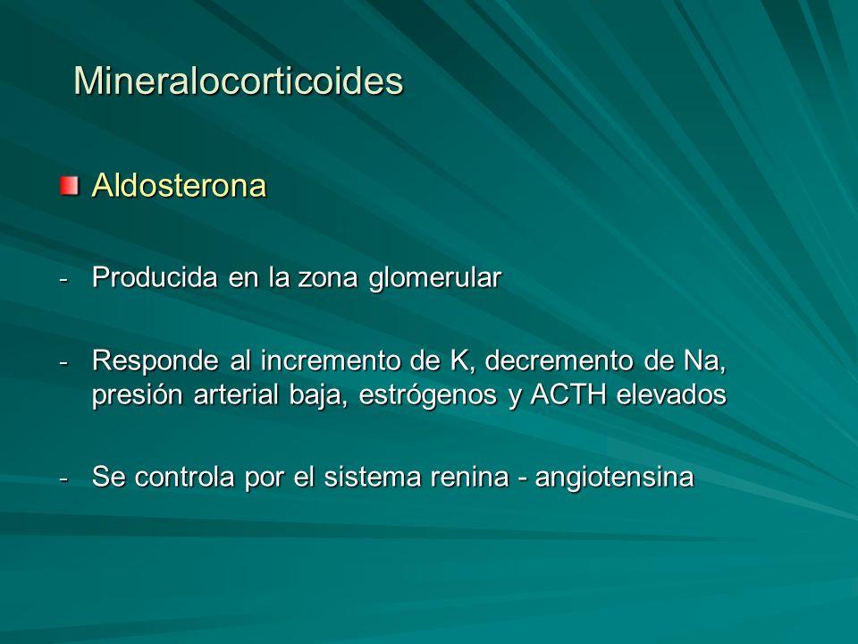 Mineralocorticoides Aldosterona - Producida en la zona glomerular - Responde al incremento de K, decremento de Na, presión arterial baja, estrógenos y