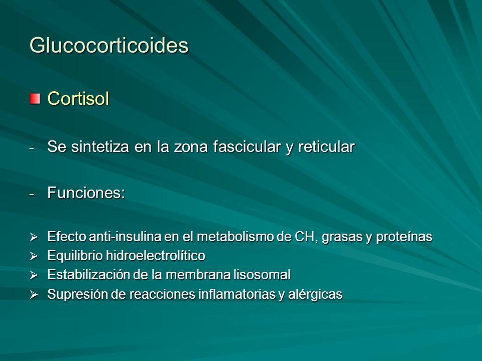 Glucocorticoides Cortisol - Se sintetiza en la zona fascicular y reticular - Funciones: Efecto anti-insulina en el metabolismo de CH, grasas y proteín