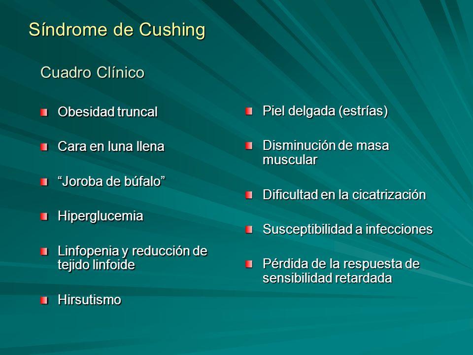 Síndrome de Cushing Cuadro Clínico Obesidad truncal Cara en luna llena Joroba de búfalo Hiperglucemia Linfopenia y reducción de tejido linfoide Hirsut