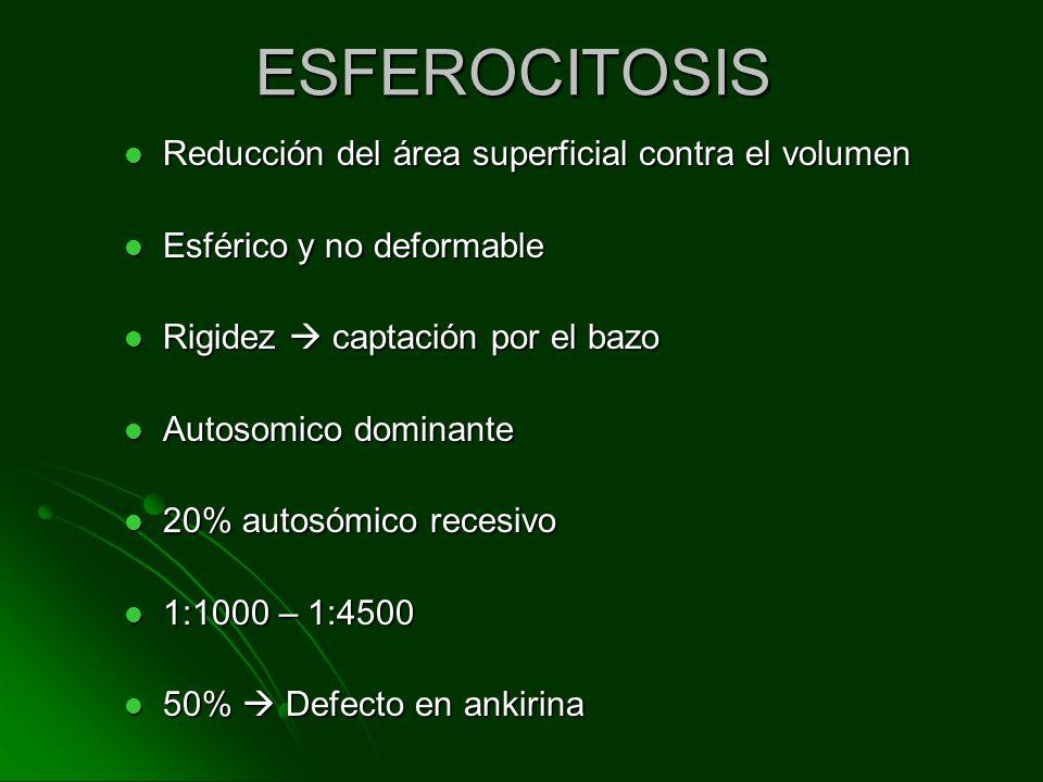 ESFEROCITOSIS Reducción del área superficial contra el volumen Reducción del área superficial contra el volumen Esférico y no deformable Esférico y no