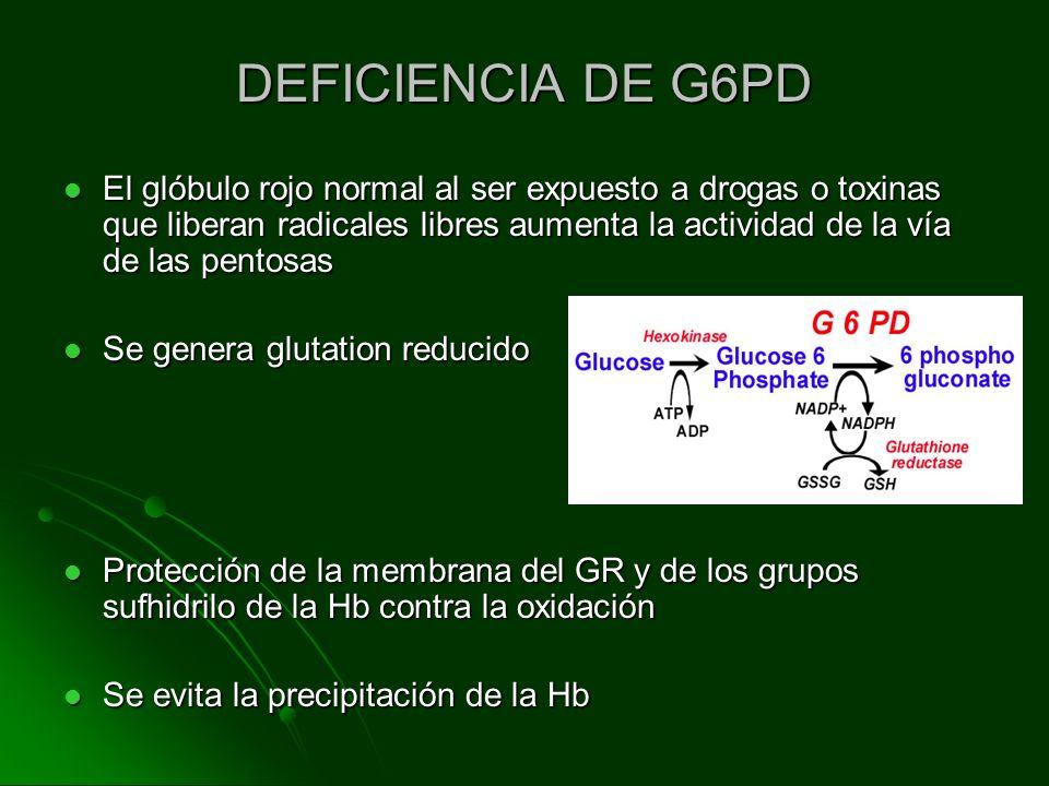 DEFICIENCIA DE G6PD El glóbulo rojo normal al ser expuesto a drogas o toxinas que liberan radicales libres aumenta la actividad de la vía de las pento