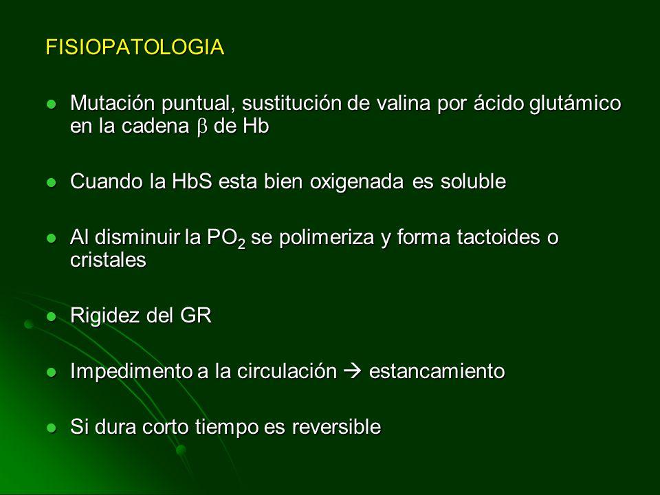 FISIOPATOLOGIA Mutación puntual, sustitución de valina por ácido glutámico en la cadena de Hb Mutación puntual, sustitución de valina por ácido glutám