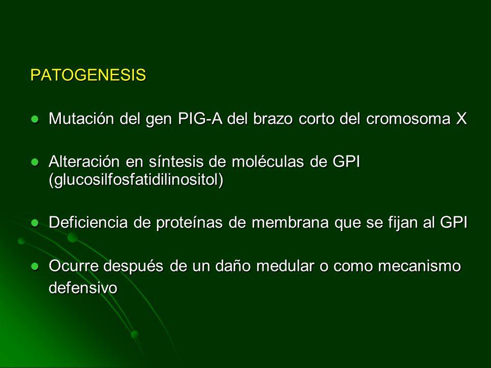 PATOGENESIS Mutación del gen PIG-A del brazo corto del cromosoma X Mutación del gen PIG-A del brazo corto del cromosoma X Alteración en síntesis de mo