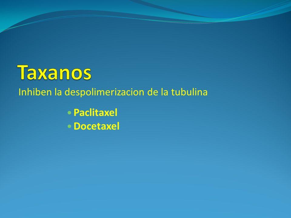 Inhiben la despolimerizacion de la tubulina Paclitaxel Docetaxel