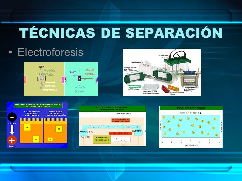 TÉCNICAS DE SEPARACIÓN Electroforesis