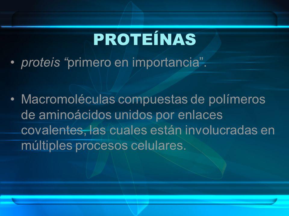 PROTEÍNAS proteis primero en importancia. Macromoléculas compuestas de polímeros de aminoácidos unidos por enlaces covalentes, las cuales están involu
