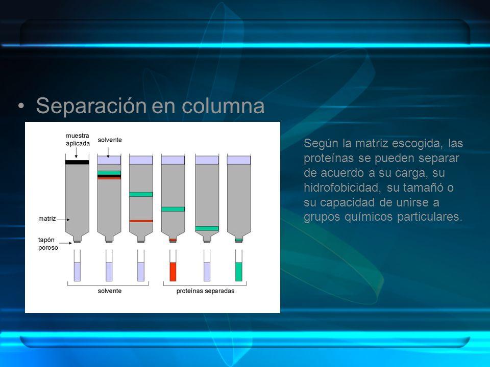 Separación en columna Según la matriz escogida, las proteínas se pueden separar de acuerdo a su carga, su hidrofobicidad, su tamañó o su capacidad de