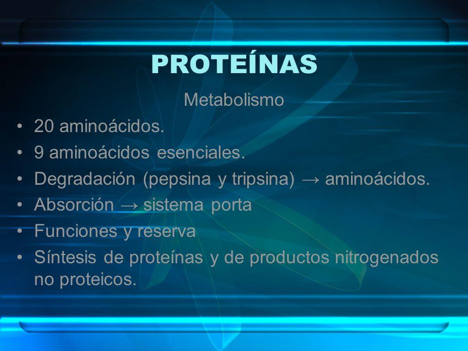 PROTEÍNAS Metabolismo 20 aminoácidos. 9 aminoácidos esenciales. Degradación (pepsina y tripsina) aminoácidos. Absorción sistema porta Funciones y rese