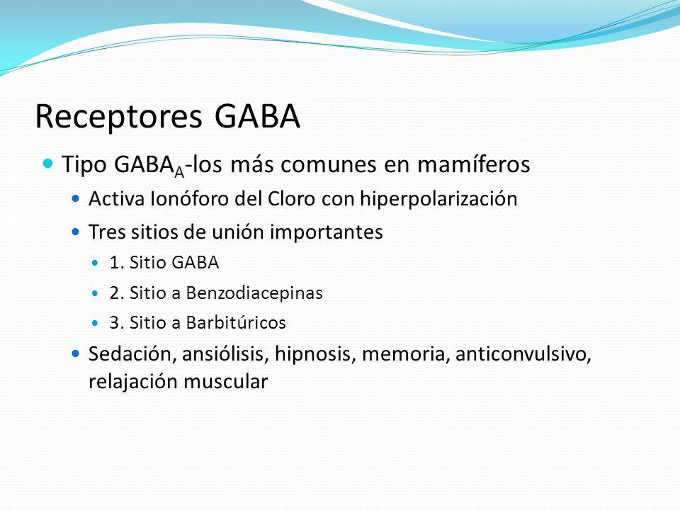 Receptores GABA Tipo GABA A -los más comunes en mamíferos Activa Ionóforo del Cloro con hiperpolarización Tres sitios de unión importantes 1. Sitio GA