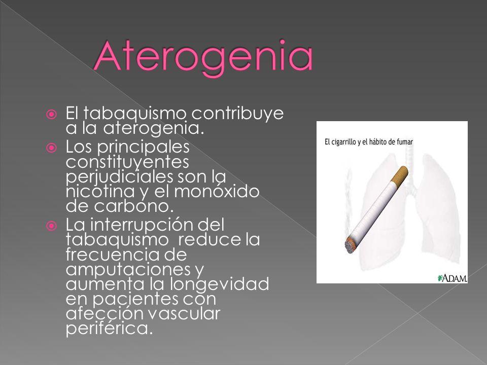 El tabaquismo contribuye a la aterogenia.