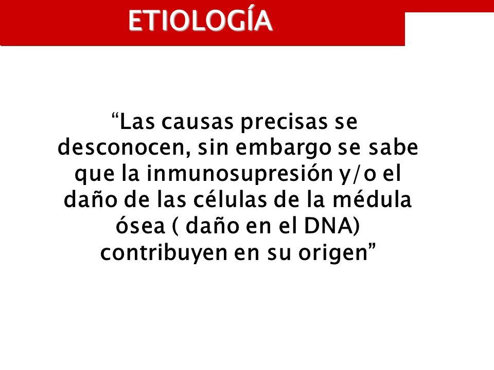 ETIOLOGÍA Las causas precisas se desconocen, sin embargo se sabe que la inmunosupresión y/o el daño de las células de la médula ósea ( daño en el DNA) contribuyen en su origen