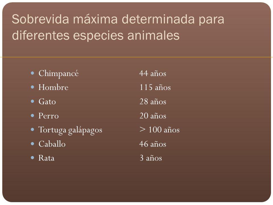 Sobrevida máxima determinada para diferentes especies animales Chimpancé44 años Hombre115 años Gato28 años Perro20 años Tortuga galápagos > 100 años C
