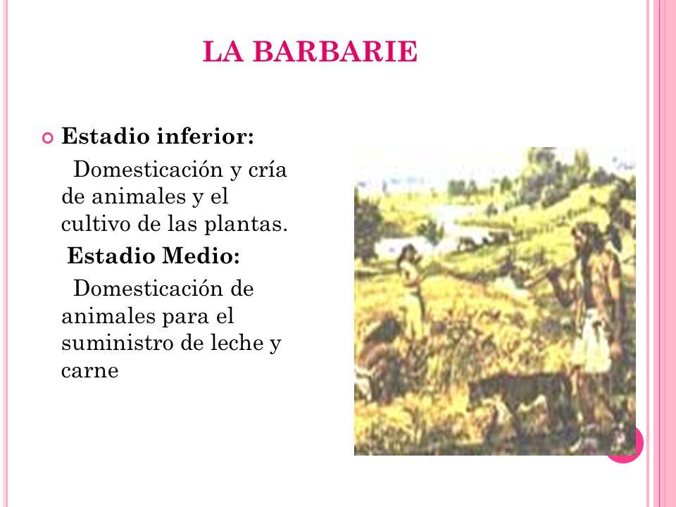 LA BARBARIE Estadio inferior: Domesticación y cría de animales y el cultivo de las plantas. Estadio Medio: Domesticación de animales para el suministr