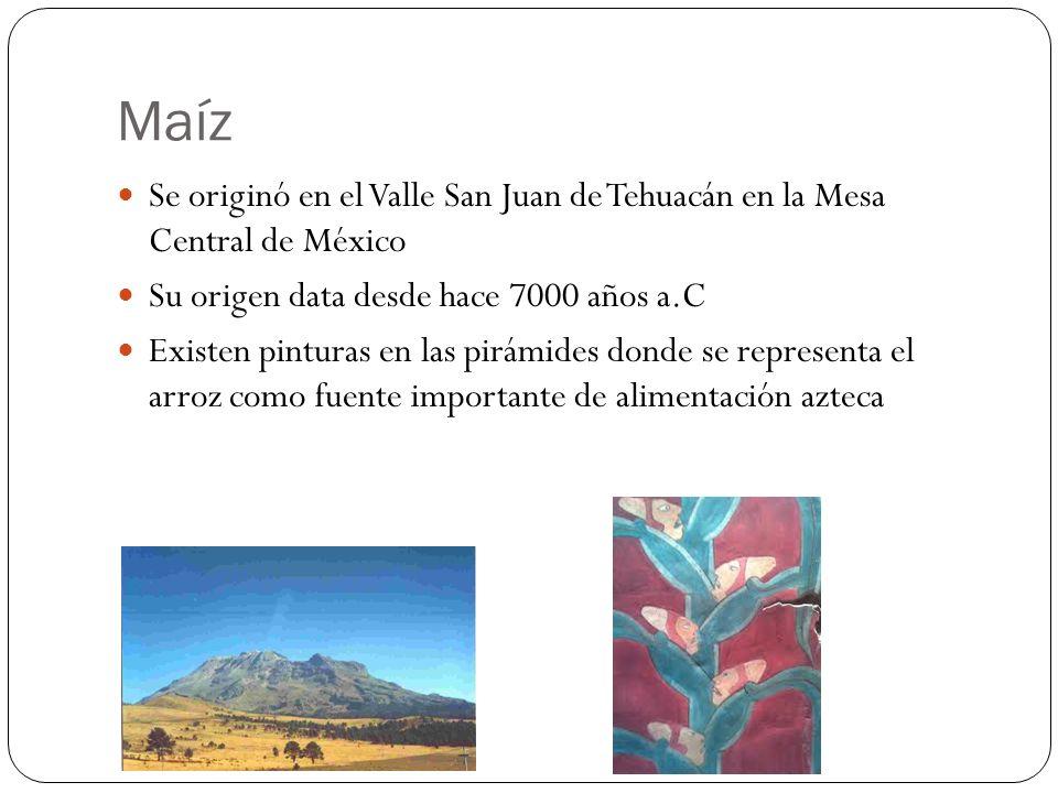 Maíz Se originó en el Valle San Juan de Tehuacán en la Mesa Central de México Su origen data desde hace 7000 años a.C Existen pinturas en las pirámide